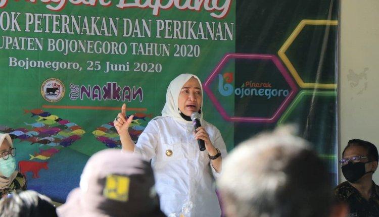 Bupati Bojonegoro Kunjungi Lapang Kelompok Peternakan