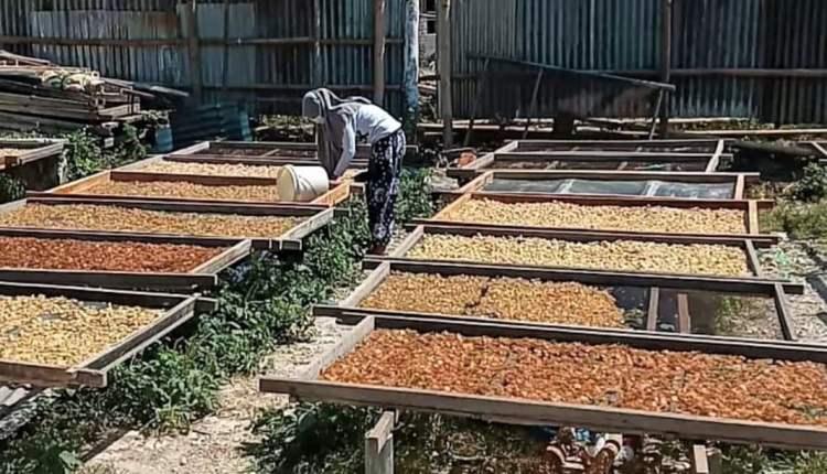 usaha pengolahan kulit sapi jadi bahan krupuk rambak di tanjungharjo, kapas2