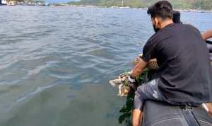 Anggota Komantab bersama Bhabinsa dan Polairud Sibolga saat menenggelamkan bangkai Penyu mati di perairan Sibolga. Foto: Rakyatsumut.com