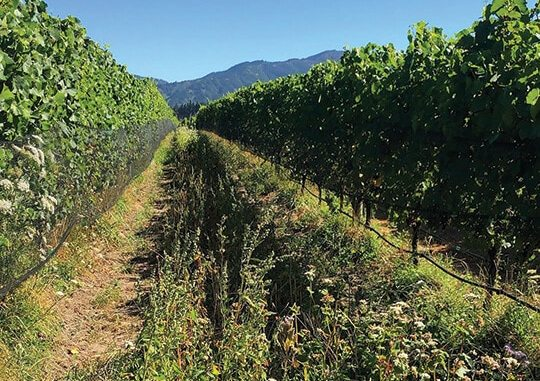 Lindsay Rice, owner of Vita Vite, captures the beauty of New Zealand while on a trip to learn about wine