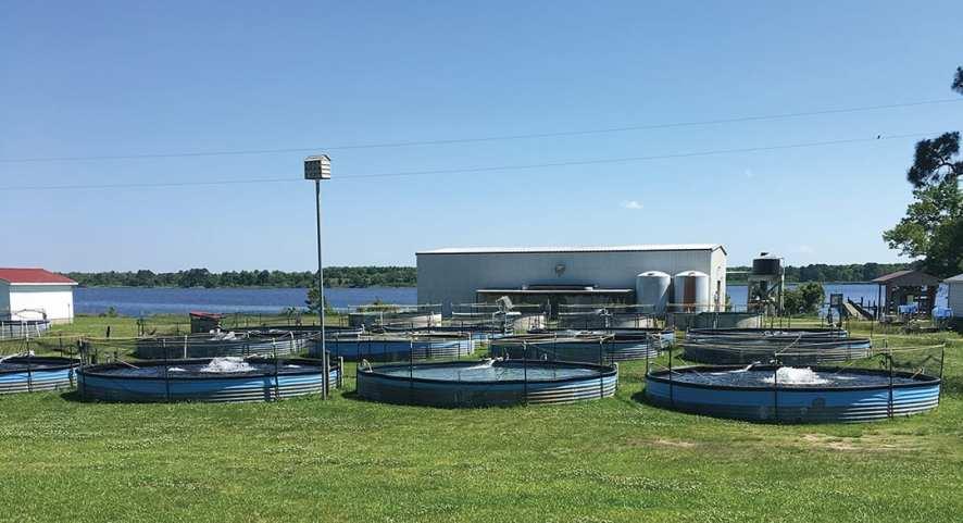 Pamlico Aquaculture Field Laboratory
