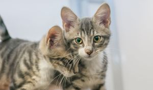 Household Harmony @ SAFE Haven for Cats | Raleigh | North Carolina | United States