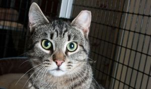 Our Community, Our Cats – TNVR Basics @ SAFE Haven for Cats | Raleigh | North Carolina | United States
