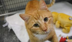 January Volunteer Information Session @ SAFE Haven for Cats | Raleigh | North Carolina | United States