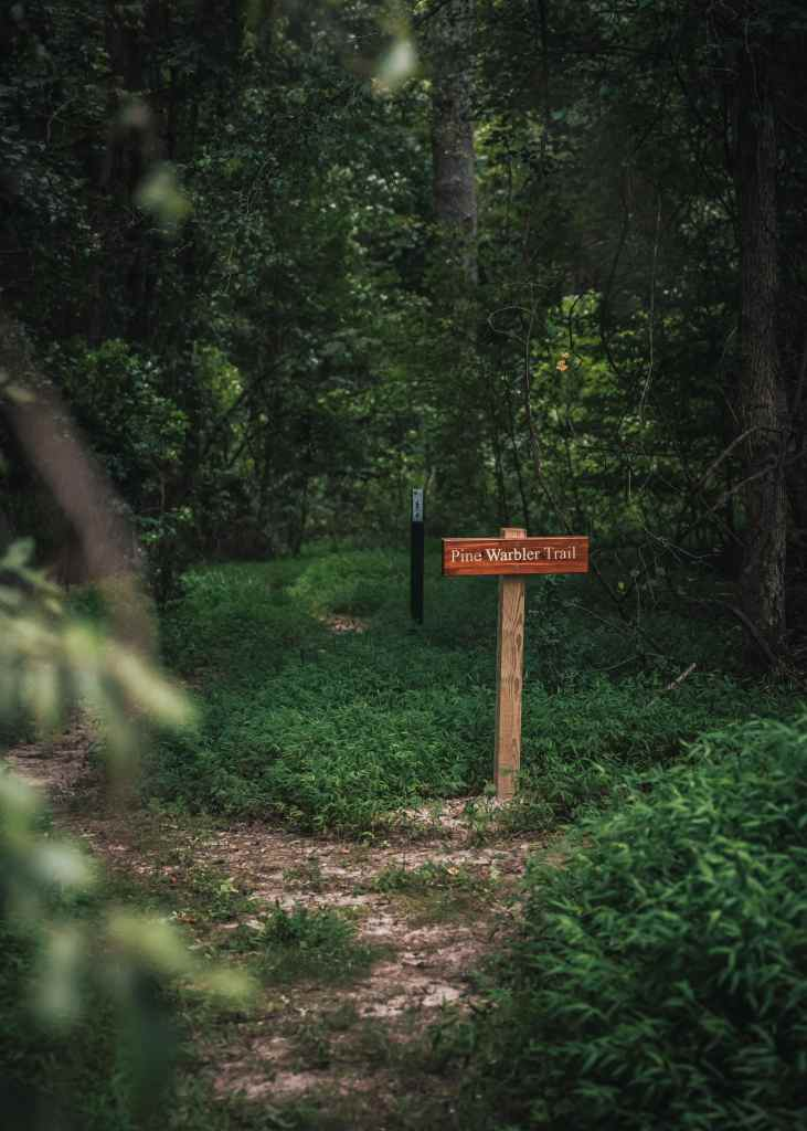 Pine Warbler Trail at Bailey and Sarah Williamson Preserve