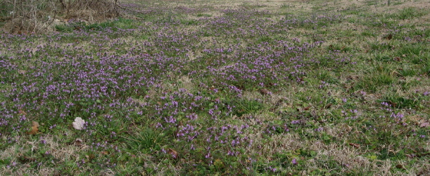 henbit-on-hodge-rd_1_1