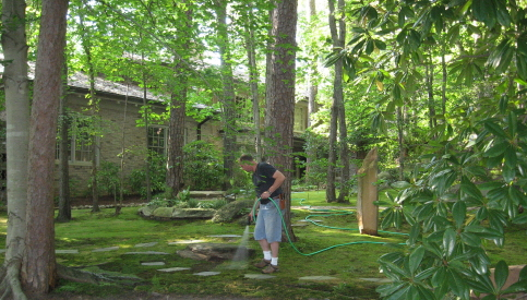 David Spain tends the Urquhart moss garden