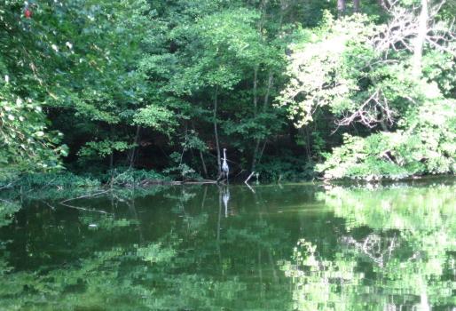 heron at pond's edge