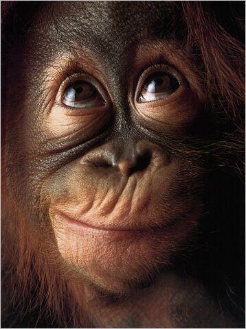 A I the 100th monkey?