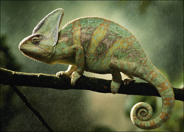 be a real lawyer, not a chameleon