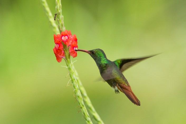 Costa Rica Diary