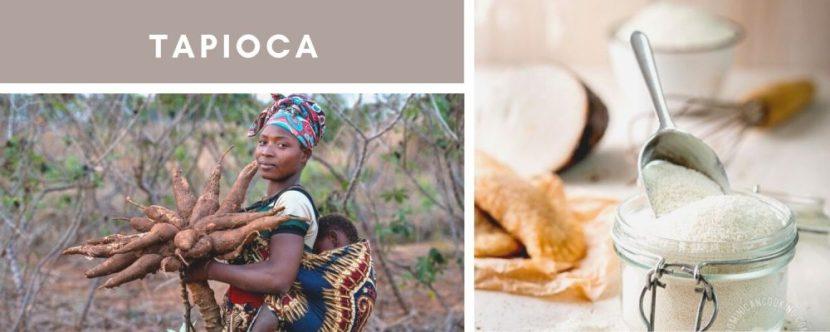 tapioca versus manioc