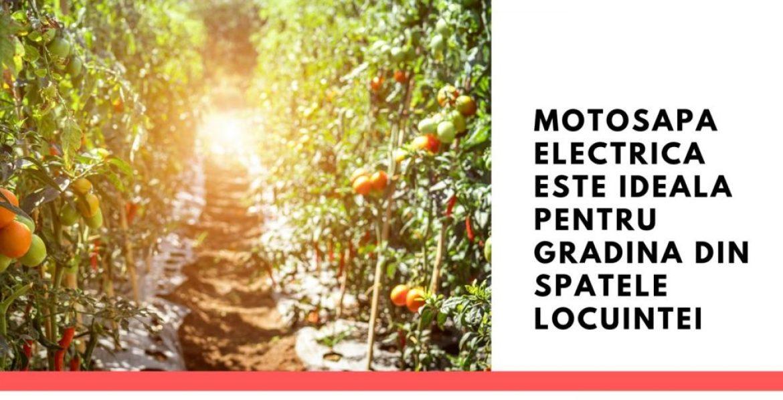 Motosapa electrica este ideala pentru gradina din spatele locuintei