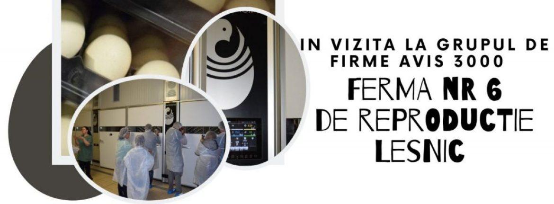 Povestea de succes a complexului avicol integrat AVIS 3000- Ferma de reproductie nr.6, Lesnic
