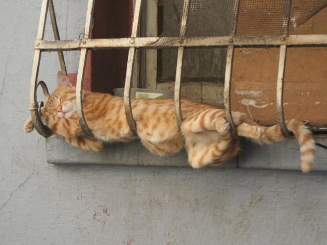 Somnul de frumusete al unei pisici