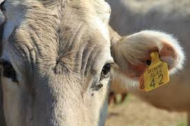 Beneficis de la carn ecologica