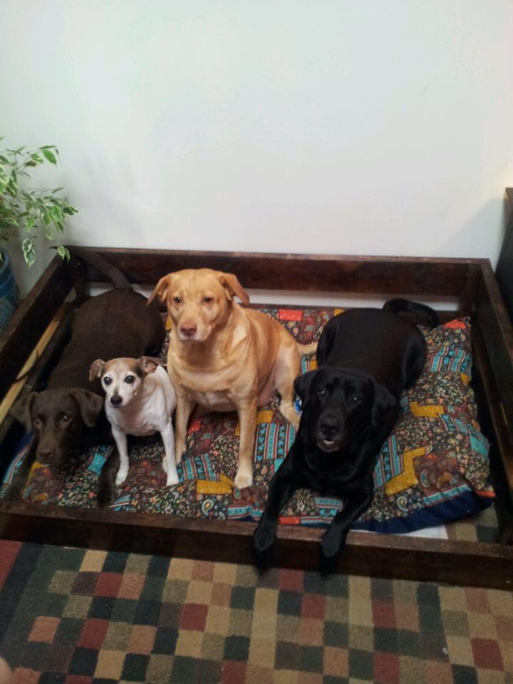 DIY Dog Bed Frame Amp Pillow For 50 Or Less Ramble On Rose