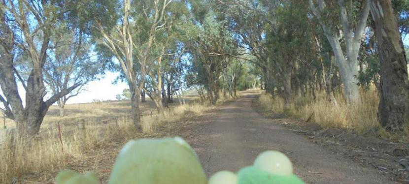 2017 Disjointed – Teeny roads going nowhere