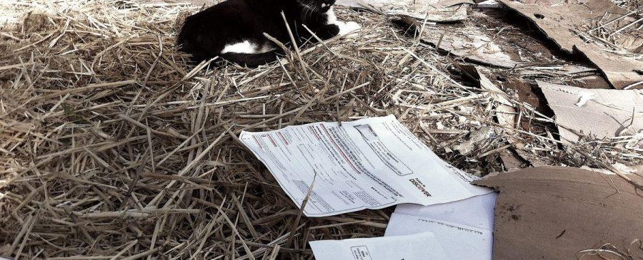 Cat on the Sheet Mulch