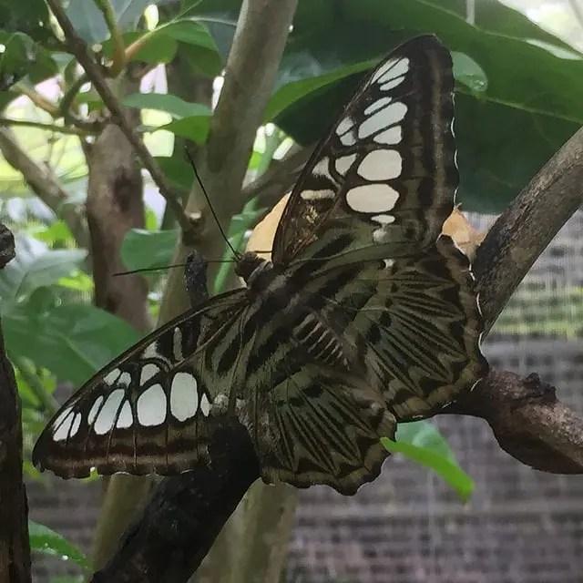 Butterfly in Butterfly Farm