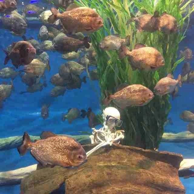 Piranha KLCC Aquarium