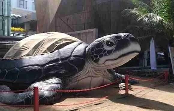 Giant Sea Turtle In Kuta Bali