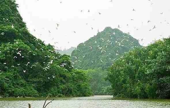 Thang Nam Bird Garden
