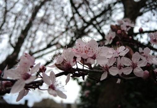 blossom-twig