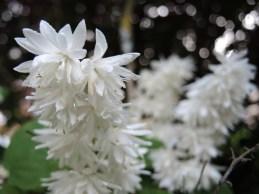 white-blossom-1
