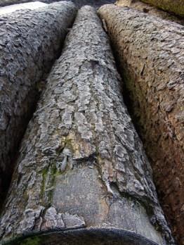 frosty-logs