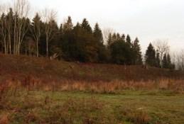 grazing-area-4