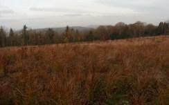 grazing-area-8