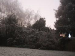 frosty-garden