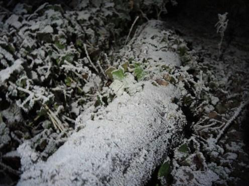 frosty-log