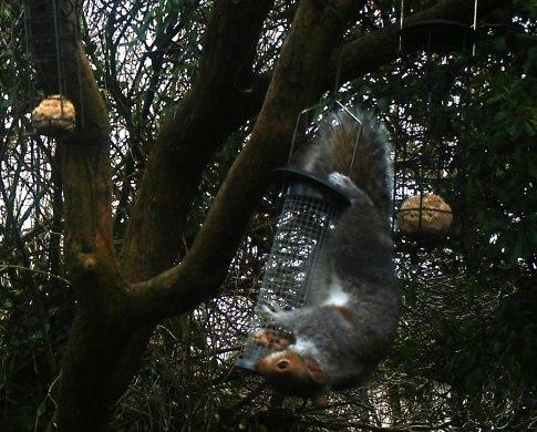 IMAG0047-squirrel