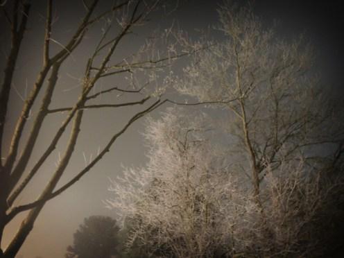 underlit-trees