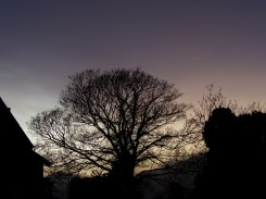Photo of silhouette of tree