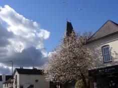 Photo of tree blosssom