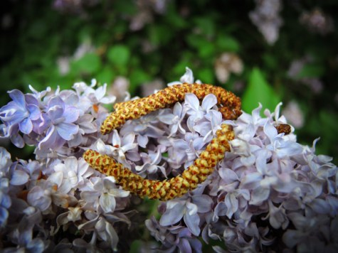 Photo of silver birch catkins on lilac flowers