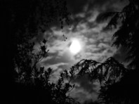Photo of full moon with clouds and foliage