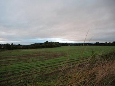 field-050916-b