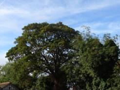 tree-vic-house