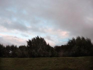 yazor-trees-050916