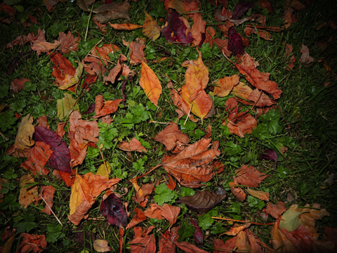 Photo of autumn leaves on grass