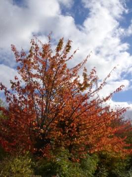 autumnal-tree-oct-16-b