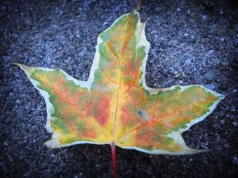 leaf-oct-1