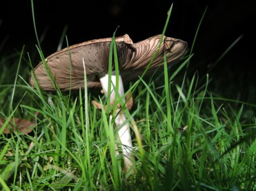 shroom-grass