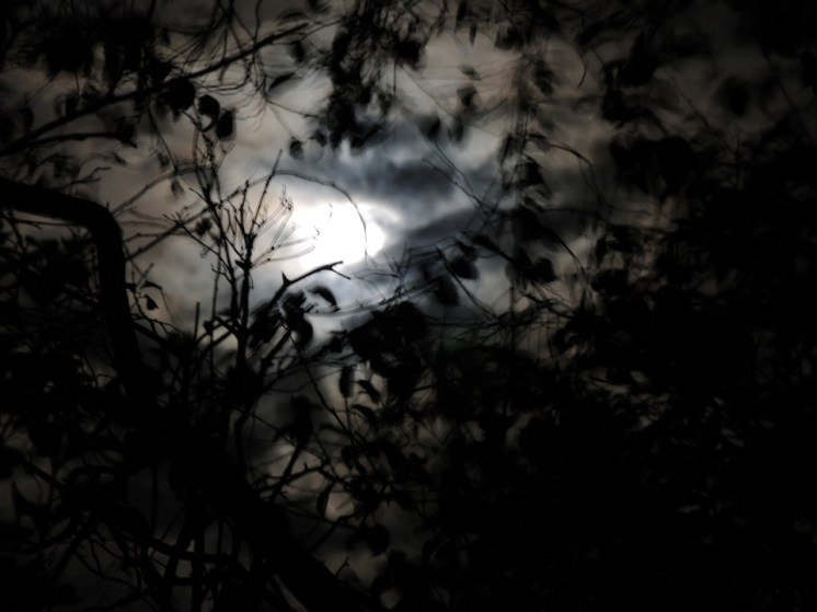 blurry-leaf-moon