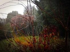 Photo of cobweb