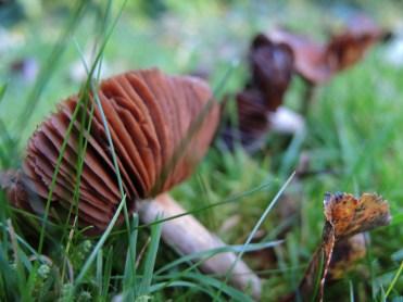 fungi-161116-a